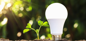 Led lightbulb green choice